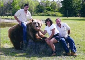 Welde Bears 3